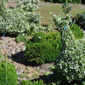 Dalsza część ogrodu