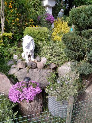 Ogród powstawał przez lata. Co roku pojawiają się w nim nowe kwiaty i krzewy. Jest to moja pasja dzięki której znajduję ukojenie i spokój